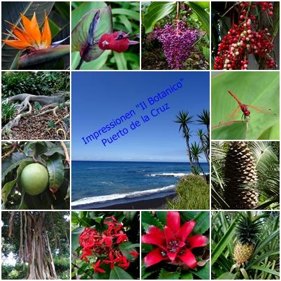 Collage Botanico