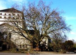 Trauerhalle - im Hintergrund der Urnenturm/altes Krematorium