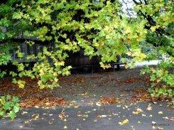 Schützendes Blätterdach