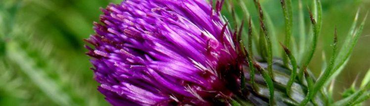 cropped-cropped-dsc019131.jpg