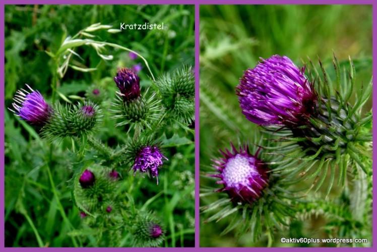 NATUR-Pflanzen_Kräuter