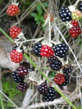 Marmeladenfrüchte