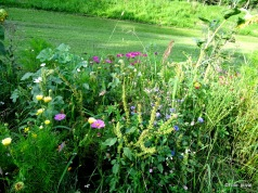 Wegbegleiter Blumen