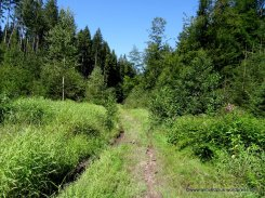 Auf stillen Pfaden durch den Wald