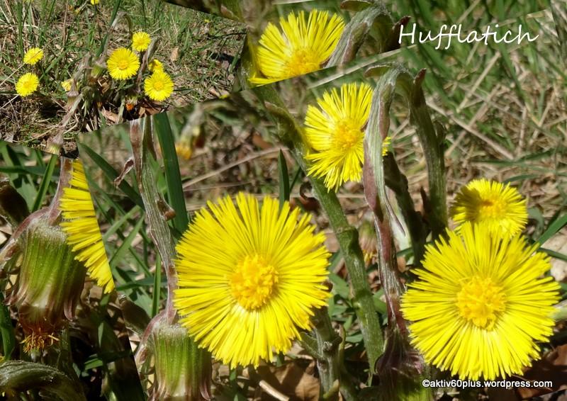 Natur_Wald_Frühjahr-001