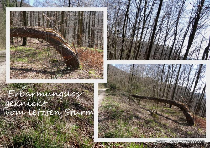 Natur_Wald_Frühjahr